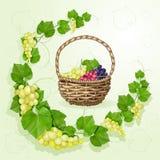 葡萄有叶子背景 图库摄影