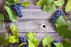 葡萄有绿色叶子背景 免版税库存图片