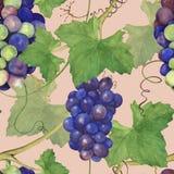 葡萄束1 库存照片