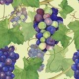 葡萄束8 免版税库存图片