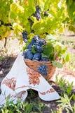 葡萄构成在葡萄园里 库存图片