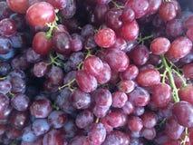 葡萄果子有益于您的健康 免版税库存图片