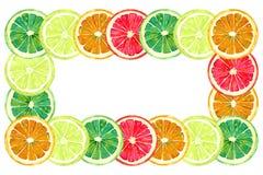葡萄柚、桔子、石灰和柠檬、水平的框架的贺卡或横幅设计,白色背景 向量例证