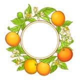 葡萄柚传染媒介框架 库存图片