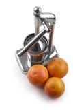 葡萄柚剥削者 库存图片