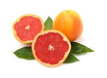 葡萄柚叶子 免版税图库摄影
