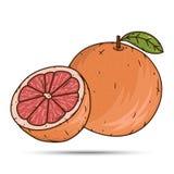 葡萄柚果子和切片在白色背景 免版税库存图片