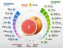 葡萄柚果子维生素和矿物  向量例证