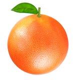 葡萄柚查出的白色 免版税库存图片