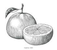 葡萄柚汇集手凹道葡萄酒在whi隔绝的剪贴美术 向量例证