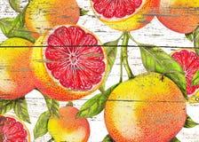 葡萄柚的手拉的样式在木纹理的 免版税库存照片