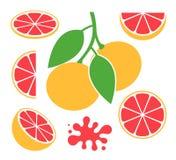 葡萄柚集合 在白色背景的被隔绝的葡萄柚 免版税库存照片