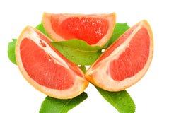 葡萄柚 免版税库存图片