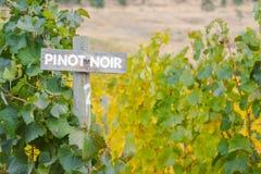 葡萄树木黑比诺葡萄酒标志标号行在秋天 免版税库存照片