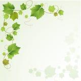 葡萄树背景 免版税库存图片