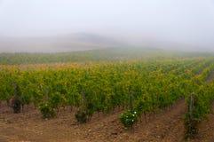 葡萄树行在葡萄园在日出下,托斯卡纳,意大利的 库存图片