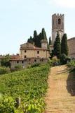 葡萄栽培在Badia di Passignano,托斯卡纳,意大利 免版税库存图片