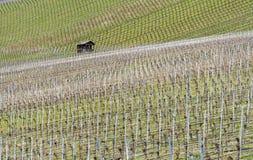 葡萄栽培风景 库存照片