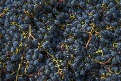 葡萄浆果 图库摄影