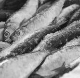 葡萄牙人Cozine沙丁鱼 库存图片