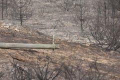 葡萄牙森林燃烧 库存照片