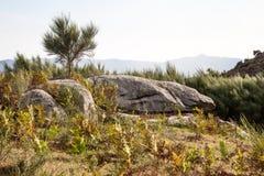 葡萄牙长满的山详细 免版税库存图片
