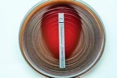 葡萄状球菌-奥里斯/葡萄球菌coagu的E测试青霉素 库存照片