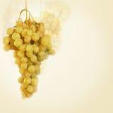 葡萄白色 库存图片