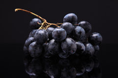 黑葡萄的特写镜头图象在黑背景的与reflectio 免版税图库摄影