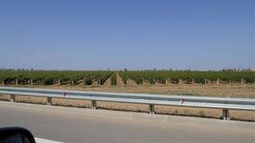 葡萄种植园被采取在汽车外面 铺路石篱芭位于在路边缘 影视素材