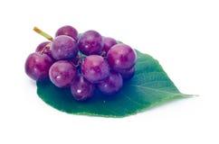葡萄红色 库存照片