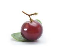 葡萄红色 库存图片