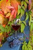 葡萄红葡萄酒 库存照片