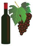 葡萄红葡萄酒 免版税库存图片