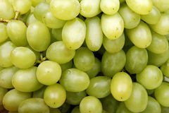 葡萄绿色 免版税库存图片