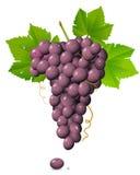 葡萄群 免版税库存图片