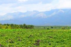 葡萄耕种-与葡萄园和小山的一个风景- Theni, Tamilnadu,印度 库存照片