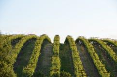 葡萄调遣在途中的纳帕谷到圣罗莎 库存图片