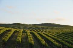 葡萄调遣在途中的纳帕谷到圣罗莎 免版税图库摄影