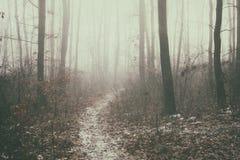 葡萄酒一个有雾的森林的样式图象 免版税图库摄影