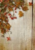 葡萄酒与叶子和花揪的秋天背景在木板 免版税图库摄影