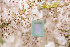 葡萄酒与开花樱桃花佐仓的照片框架 库存照片