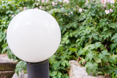 葡萄酒与植物的街灯电灯泡后面的 免版税库存照片