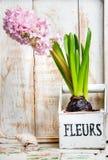 葡萄酒与老花盆贝壳的花的布置 库存图片