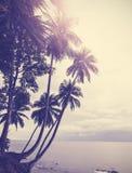 葡萄酒传统化了与棕榈树的热带海滩在日落 免版税图库摄影