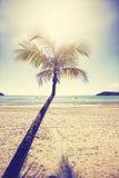葡萄酒传统化了与棕榈树的热带海滩在日落 免版税库存照片
