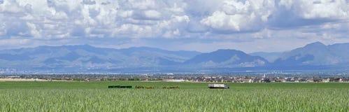 葡萄酒农厂卡车和收获机械有Wasatch全景朝向落矶山,大盐湖谷在早期的spr 免版税库存图片