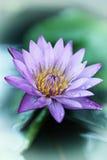 葡萄酒减速火箭的作用过滤了行家亚洲莲花的样式图象 库存照片