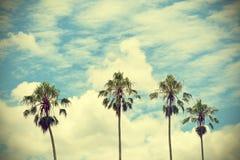 葡萄酒减速火箭的棕榈树 免版税库存图片