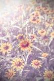葡萄酒减速火箭的被过滤的花背景,浅景深 免版税库存图片